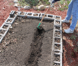 Digging channels for planting potatoes in the garden