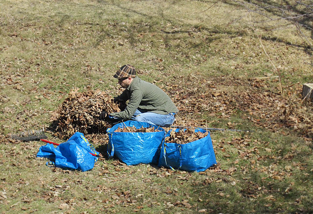 IKEA bags are perfecting for collecting yard waste