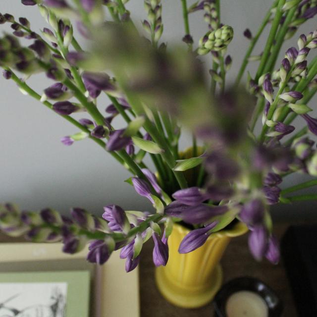 Hosta flowers   This American House