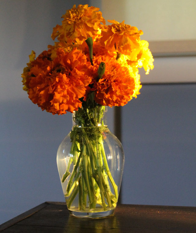 Pic a Day: Marigolds and Sunlight   This American House