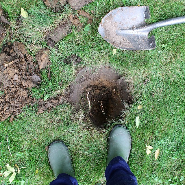 Digging Holes for New Shrubs | This American House