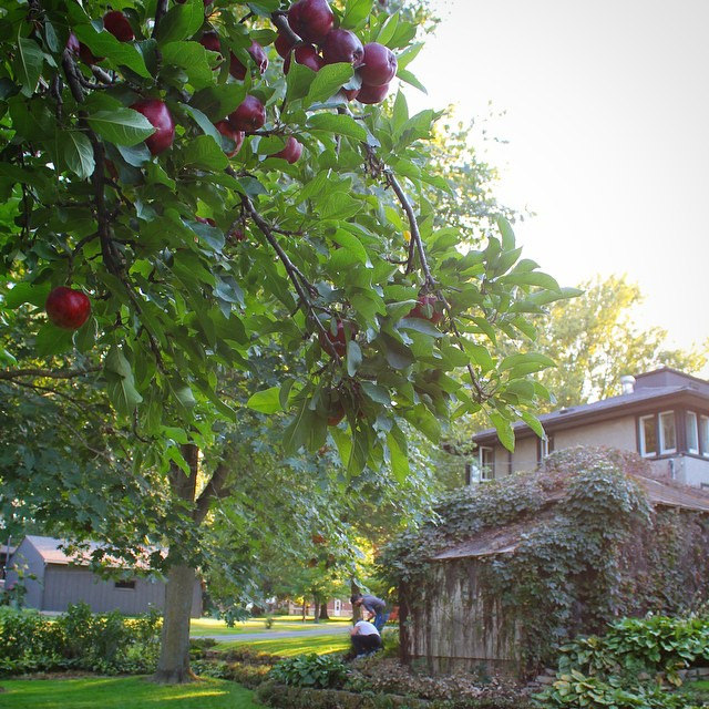 Apple Tree at the Delbert Meier House | This American House