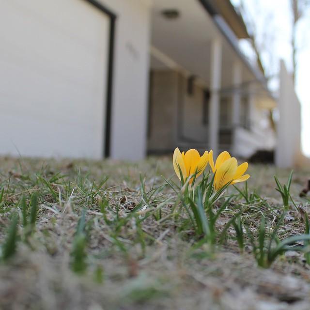 Flower Power: Bringing Spring Indoors