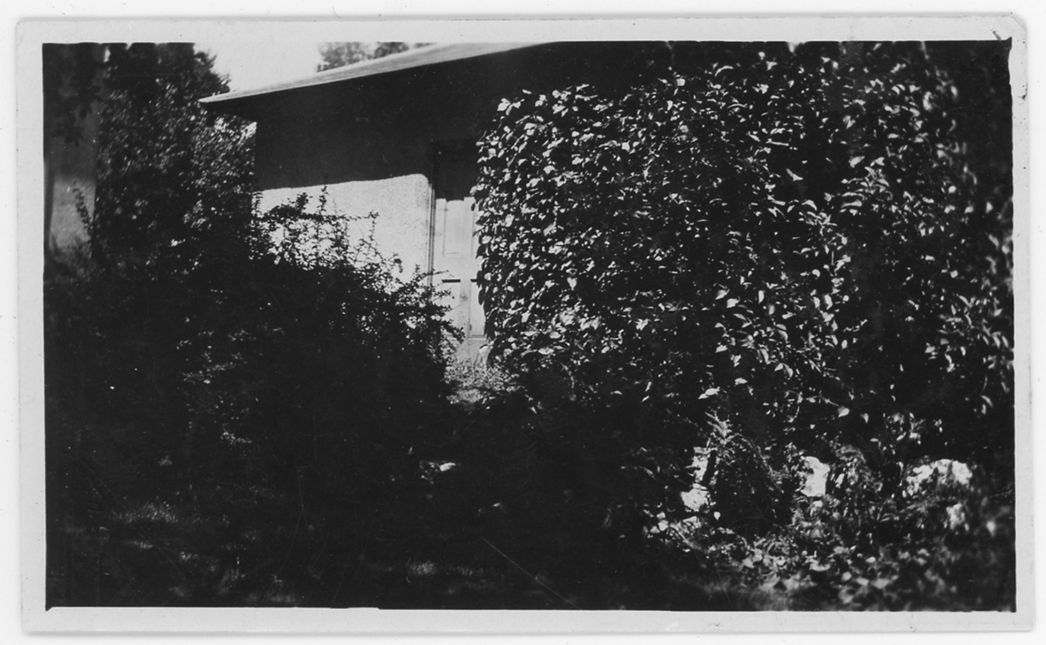 Virginia creeper on the garage of the Delbert Meier house in 1923